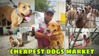 cheapest price all dogs in India    pitbull, German shepherdand any more dogs cheap price.....