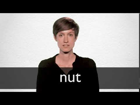 Nut definition and meaning | Collins English Dictionary