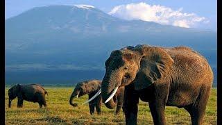 Мир путешествий.Слоновья гора Индии.Документальный фильм.