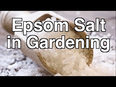 Is Epsom Salt Beneficial for Organic Gardening YouTube