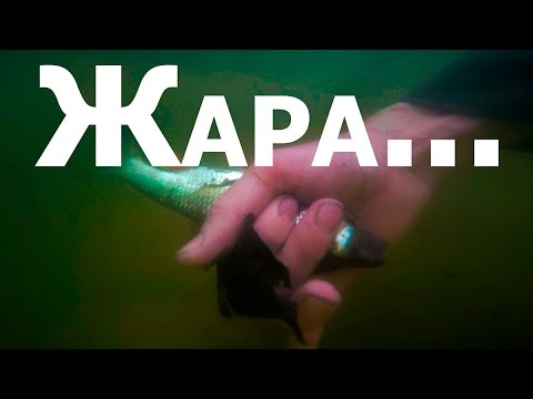 Жара ( ловля рыбы руками )
