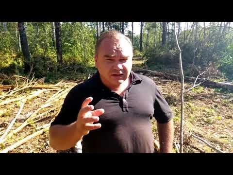 Махинации с лесным фондом Маслянино и как к ним причастен главный лесничий района Коровин?