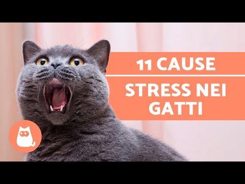 11 COSE che fanno STRESSARE il gatto – Accudire un gatto