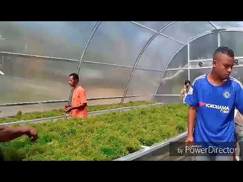 Preservation of Seaweeds Drying Using Solar Dryer