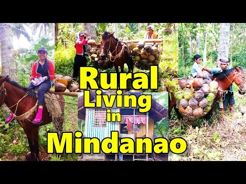 Rural Mindanao  Philippines Family Coconut Harvest