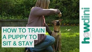 How To Train A Puppy To Sit And Stay - How To Train Your Dog