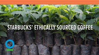 Follow Starbucks' 15 Year Journey to 100% Ethically Sourced Coffee | Conservation International