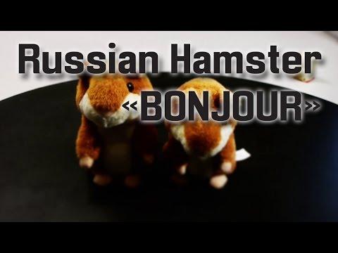 Russian Hamster Bonjour Youtube