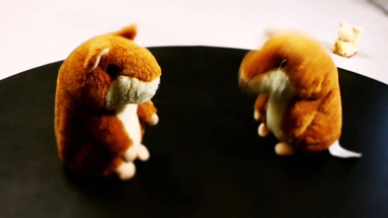 Russian Hamster Bonjour