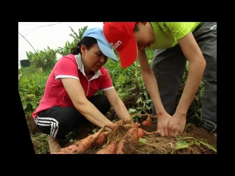 Jacaranda Outing   GK Organic Farm