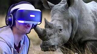 Close To A Rhino! - Virry VR - Playstation VR | Ep2