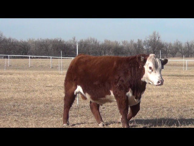 Express Ranches Lot 206