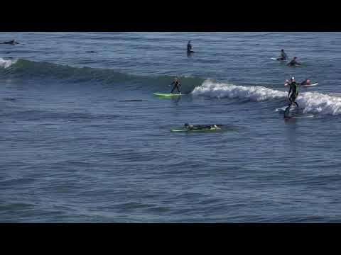 Surfing Pleasure Point