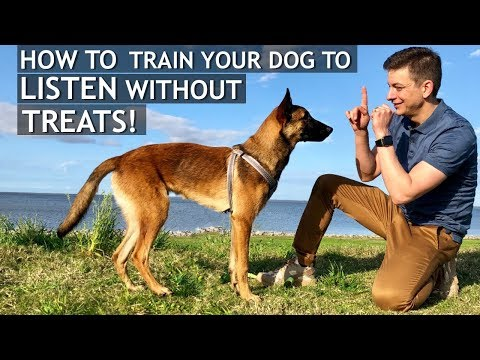 How To Train Your Dog To Listen Without Treats