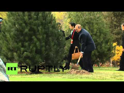 China: Vladimir Putin plants 'tree of friendship' at APEC 2014