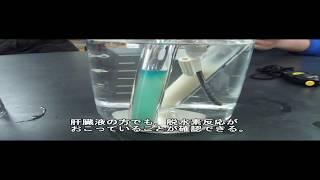 高校生物実験 脱水素酵素 デヒドロゲナーゼ 旧版