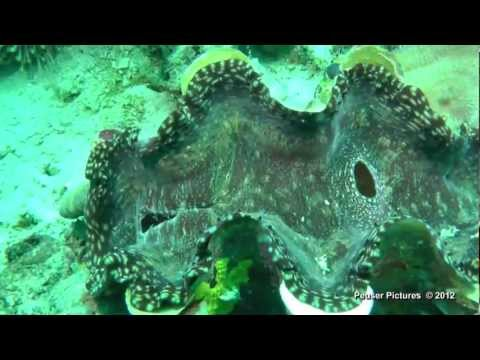 Logbon Island - Romblon Philippinen