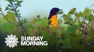 Nature: Iroquois National Wildlife Refuge
