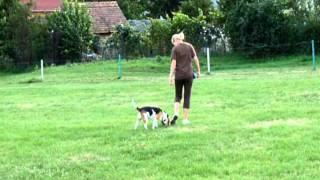 Beni Beagle, Obedience Training