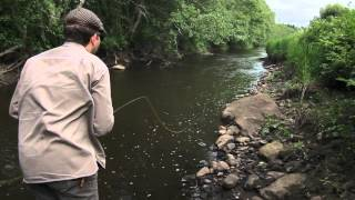 Small Stream - Big Trout thumbnail