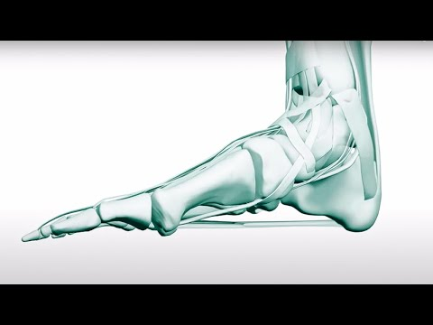 How Does The Foot Work? - Hands & Feet - BBC