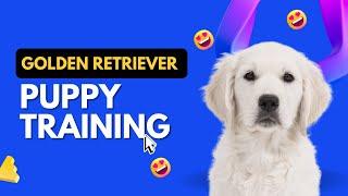 "Easy and Fun Dog Tricks to Train. 'Wait & Take it"""
