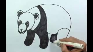 Menggambar Panda Belajar Cara Menggambar Binatang Darat Youtube