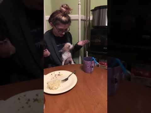 Lulu wants to EAT!