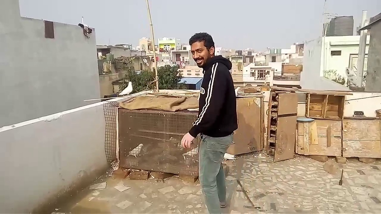 Kabootar Bazi | Doovi