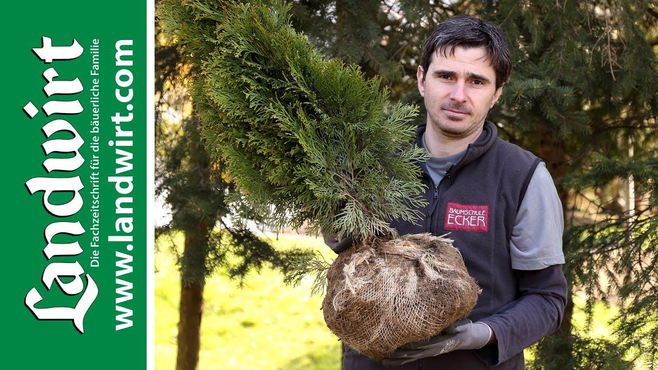 Bäume und Sträucher pflanzen