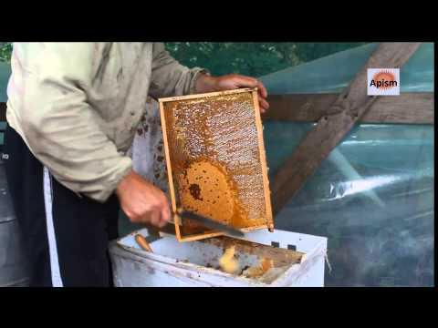 Забрусный мед- что это такое?