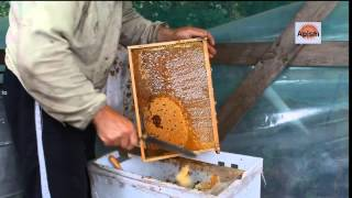 Откачка меда, забрусный мед