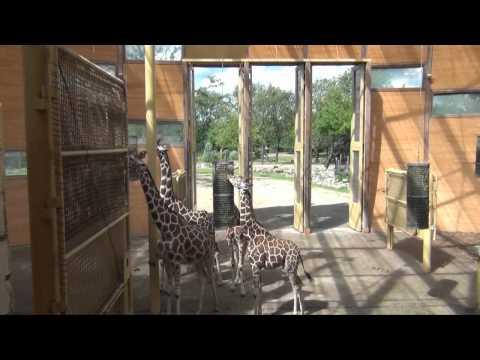 Blijdorp zoo Rotterdam 3