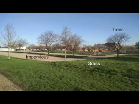 Urban heat island impacts on plant phenology (video abstract)