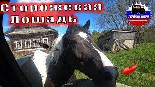 Брошенки... Чердачный Коп! Сторожевая Лошадь В Мертвой Деревне. Ч4