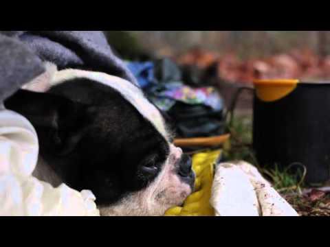 Camping- Bushcraft Backpacking Overnight Morning Appalachian Trail + Hiking Boston Terrier Vlog #52