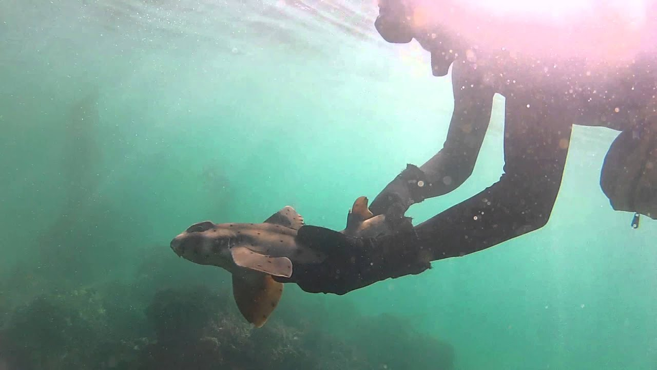 Horn shark catch and release hand fishing - Orange County southern California - YouTube
