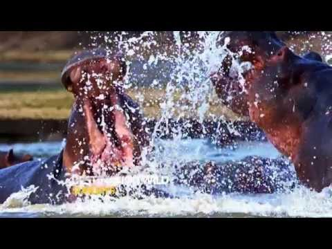 Nat Geo Wild HD Adverts January 2015