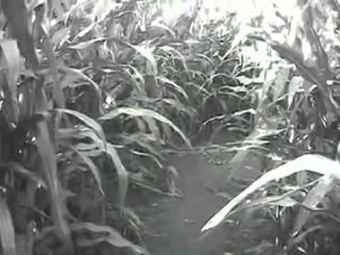 HEAP'S HAUNTED CORN MAZE HEAP'S GIANT PUMPKIN FARM MINOOKA IL