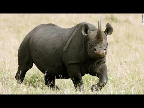 The Endangered Black Rhino Hunter (Interview with Corey Knowlton)