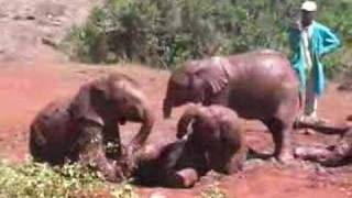 Elephant Orphans at The Sheldrick Wildlife Trust