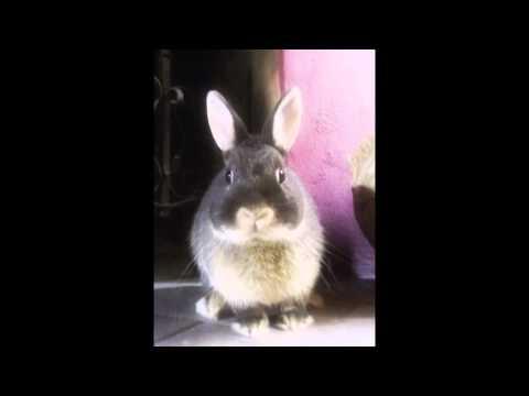 AAE Associazione Animali Esotici Onlus – Scritti Lapini di Marta Marino