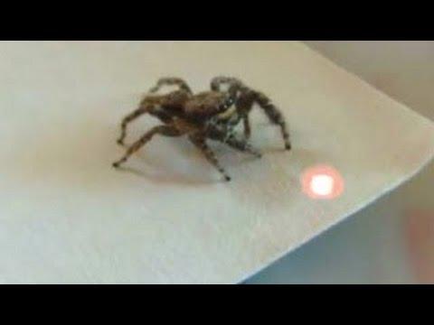 videos de risa de animales persiguiendo el puntero del laser