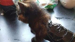 Живодеры обмотали котенка скотчем и натравливали на него собаку и хорьков