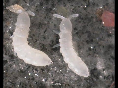 Late Night Hexapoda Gastropoda Performance (Slug and Springtails)