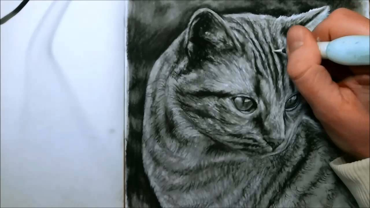 Hyperrealist Cat Drawing Youtube