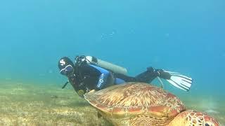 [필리핀 사방비치] 거북이랑 다이빙~