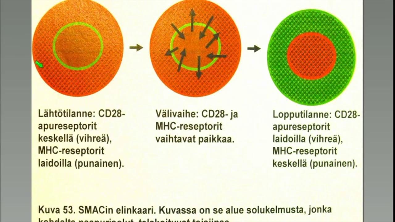 Immunologinen