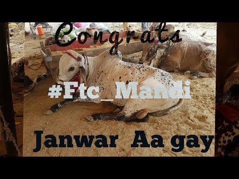Ftc Maveshi Mandi Visit I 25-July-2018 I Bakra Mandi Pakistan,Karachi I