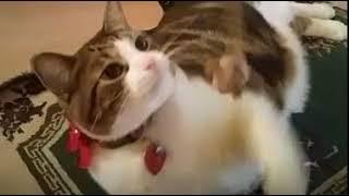 Funny Cats - Cute Cat